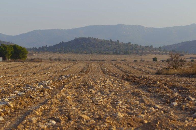 Parcelas roturadas con las líneas de plantación ya abiertas.
